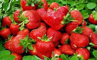 武漢摘草莓好去處
