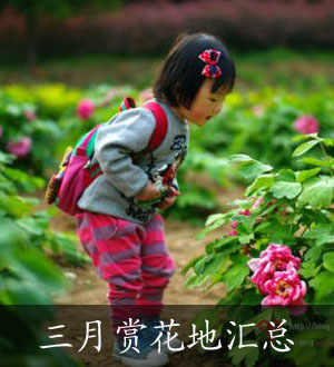 南京三月赏花好去处