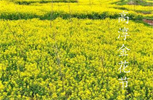 南京赏花攻略