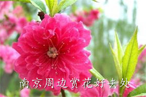 南京周边赏花