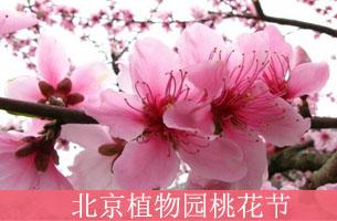2015北京赏花