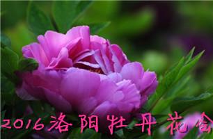 2016郑州踏青