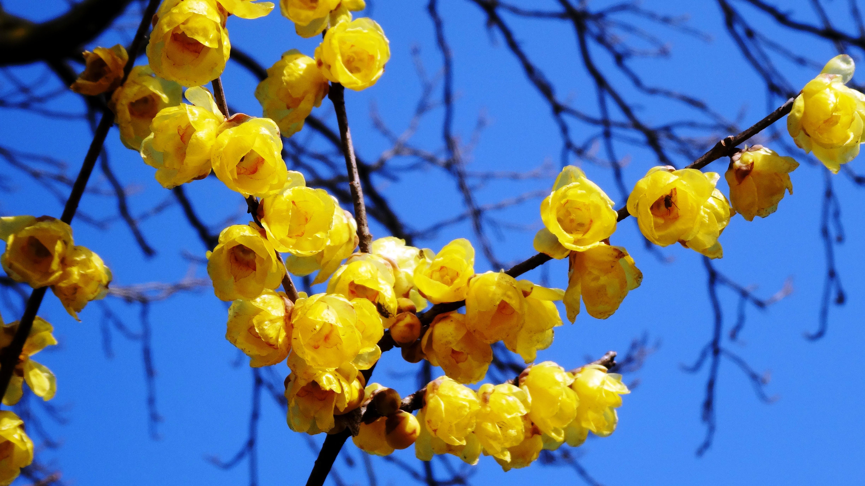 颐和园春季赏花
