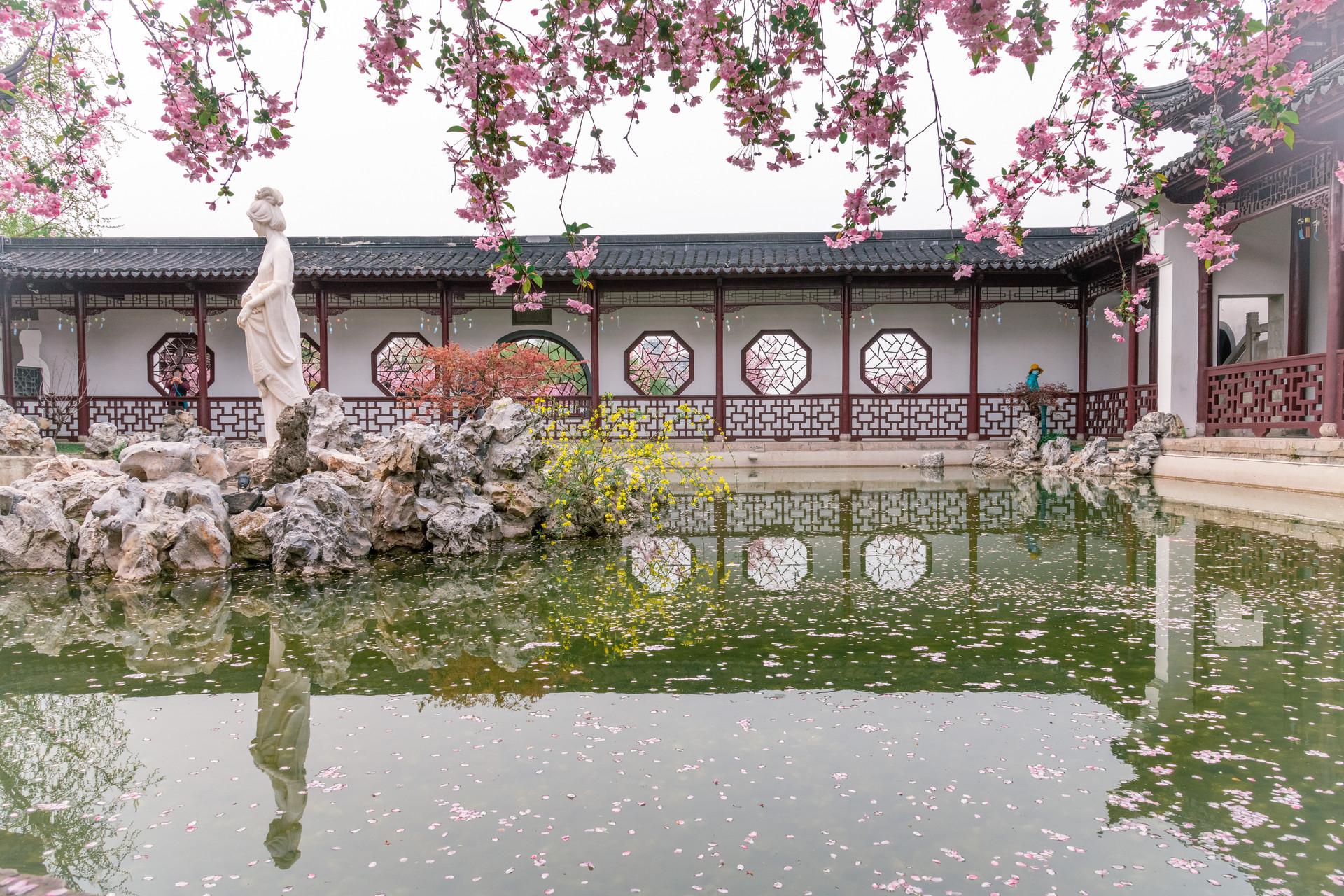 南京看郁金香的地方