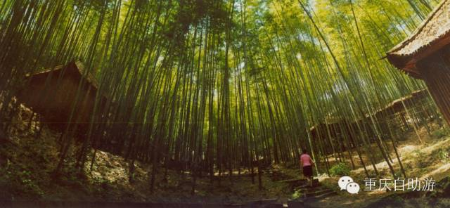 清新洗肺,重庆这些竹海氧吧里去享受早春的气息!