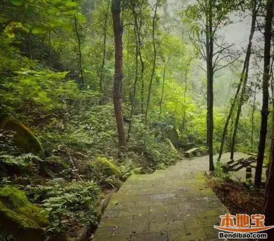 重庆最美爬山路线 比黄葛古道还霸道