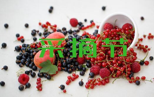 2018烟台采摘节活动!蓝莓、樱桃、桑葚、甜杏...