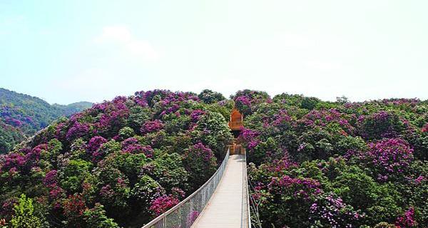 金华婺城赏花去这里(地点+路线)