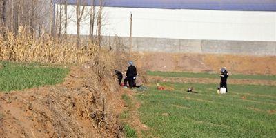 女孩放学后失踪 尸体在学校附近麦田被发现