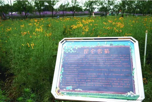 柳州市五月份超棒的赏花地点盘点