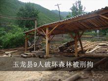 林业严打整治行动 玉龙县9人破坏