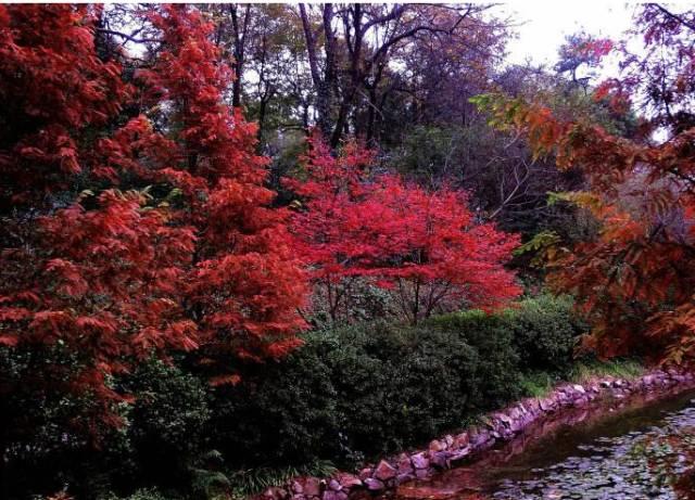 木札岭风景区,是国家aaaa级景区,也是河南省首家原始生态旅游区.