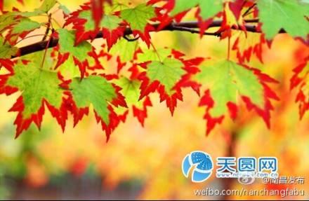 """2014""""乐享凤凰沟""""金秋旅游文皓节暨第7届南昌桂花节"""