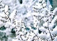 盘点南京赏雪胜地 南京看雪好去处