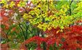 南京中山植物园赏枫叶攻略
