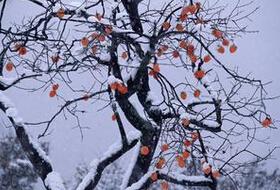 南京冬天去哪里玩好?吃喝玩乐攻略
