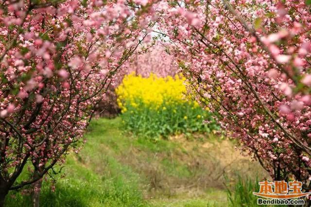 2017南京春季赏花全攻略 一整个春天都在这里了!