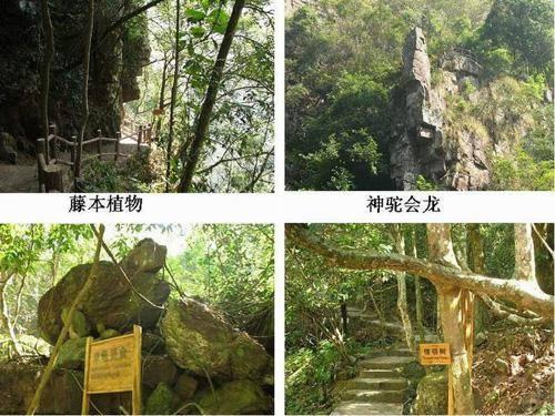 广西龙潭国家森林公园介绍