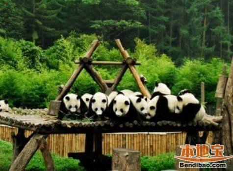 上海亲子游乐场:野生动物园