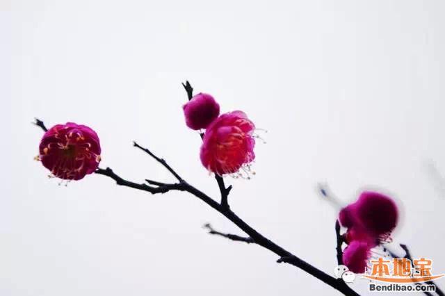 冬季上海赏梅地图一览