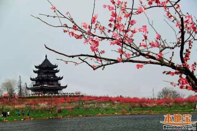 有梅花节的中国人_2016上海梅花节赏梅攻略