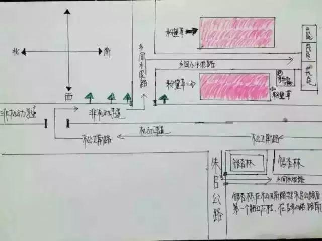 上海哪里有粉黛乱子草 魔都粉黛乱子草地图(图)
