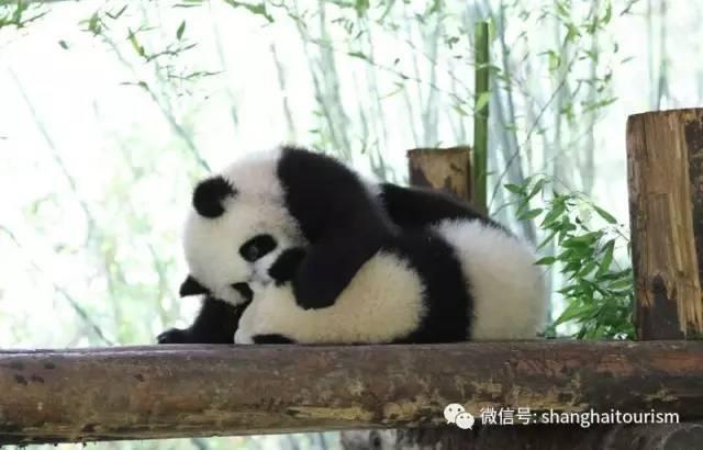 壁纸 大熊猫 动物 640_410