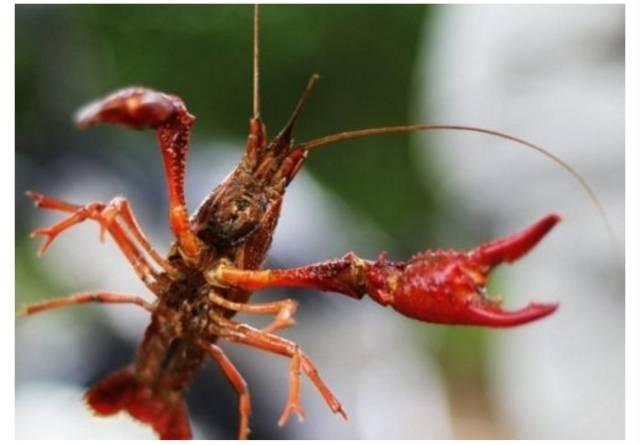 宝山罗泾钓小龙虾采摘瓜果活动 赏尽田园生态风光