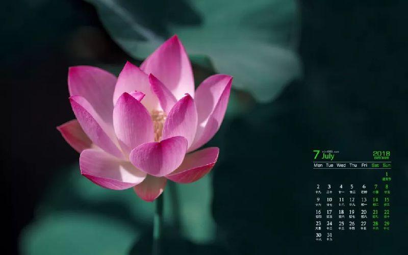 上海各大公园7月花展及活动指南