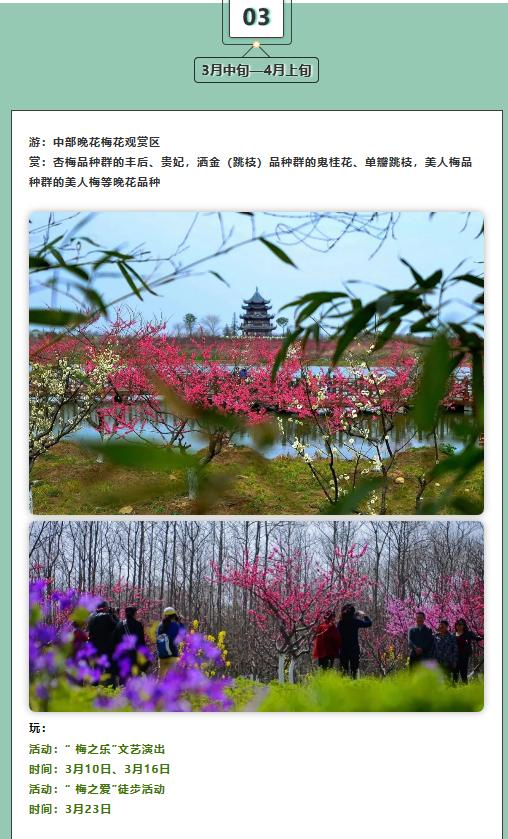 2019第五届上海梅花节2月5日开幕 4万株梅花争奇斗艳