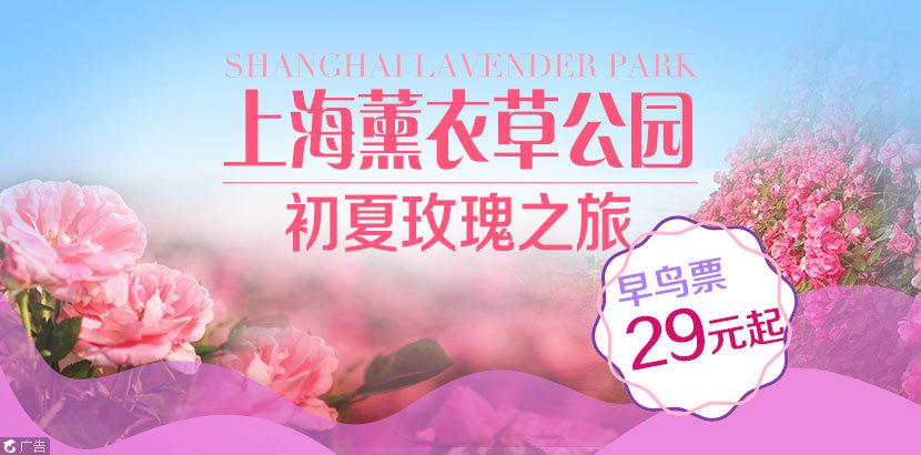 上海薰衣草公园预售特价票