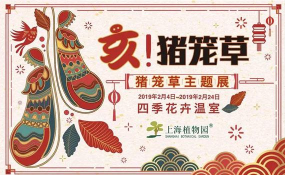 2019上海植物园猪笼草主题展攻略