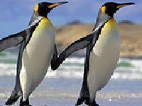 合肥汉海极地海洋世界门票收费标准