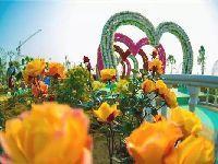 广东清明节假期适合去哪玩?省内10个旅游