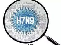 2017年全国禽流感疫情高发期 告诉你鸡