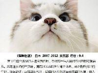 关于猫咪的好看的电影推荐  猫控们有福