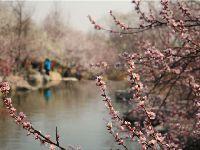 2017北京植物园桃花节赏花时间、地点及