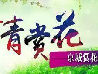 2017年春季北京公园风景区赏花文化系列