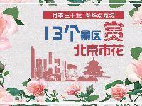 2017北京月季花展13个景区观赏好去处
