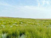 鄂尔多斯草原旅游攻略