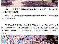 广州哪里有樱花看?2017广州看樱花的地