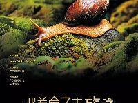 广东省博物馆最近展览:贝类动物的世界