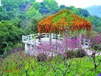 广州白云山现在有什么花?2017白云山全