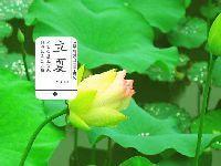 2017立夏是几月几日?广州在4月7日已经