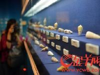 2017来省博物馆看逾千种贝类动物的贝壳
