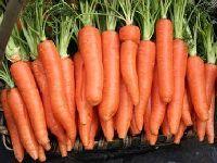 胡蘿卜的功效與禁忌