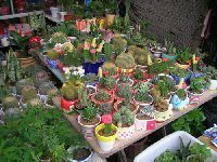 杭州有哪些花鸟市场