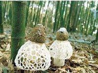 山珍云南食用野生菌