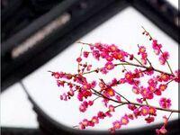 2018上海梅花节赏花攻略(时间+地点+门票