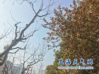 3月27日上海天气预报:晴到多云 最高20度